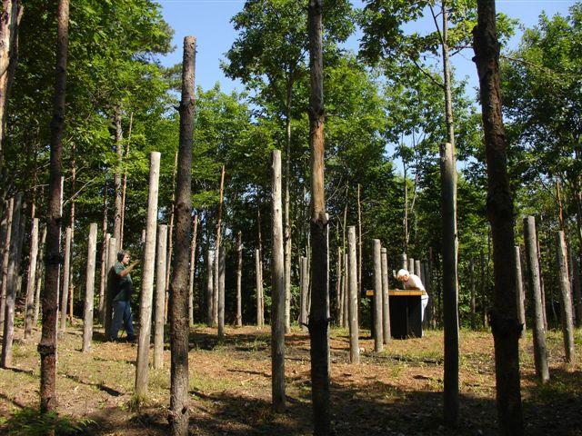 12-Celestiall-Harp-Forest-Woodhenge-setup-277a