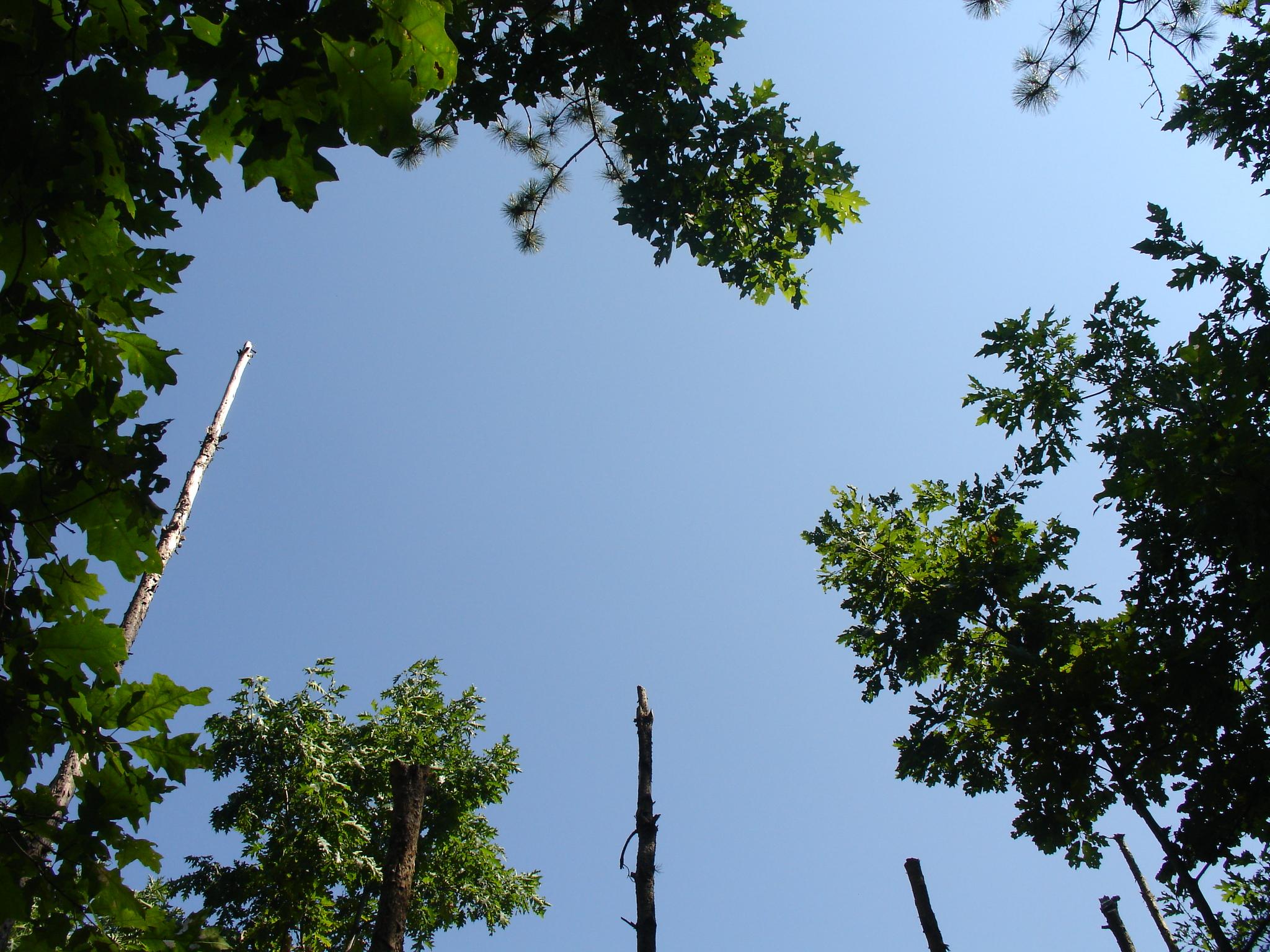 12a-Celestiall-Harp-Forest-Woodhenge-setup-283