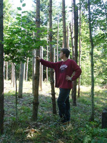 14-Celestiall-Harp-Forest-Woodhenge-setup-287