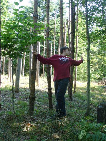 15-Celestiall-Harp-Forest-Woodhenge-setup-288