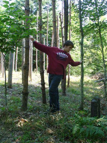 16-Celestiall-Harp-Forest-Woodhenge-setup-289