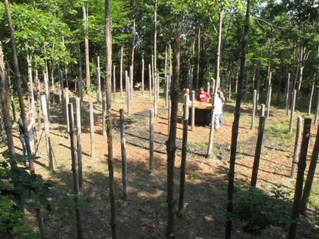 42a-Celestiall-Harp-Forest-Woodhenge-8-dir-5941