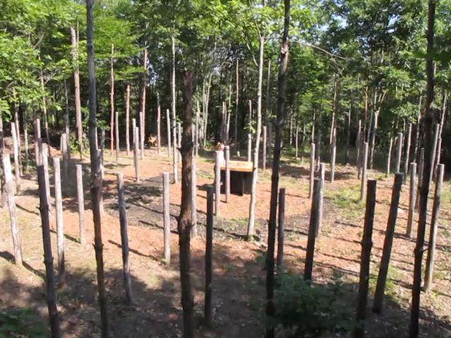 45-Celestiall-Harp-Forest-Woodhenge-kuku-3027