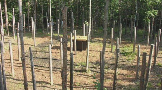 49-Celestiall-Harp-Forest-Woodhenge-kuku-30997